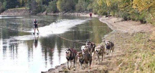 2011 Hundekjøring med vannski