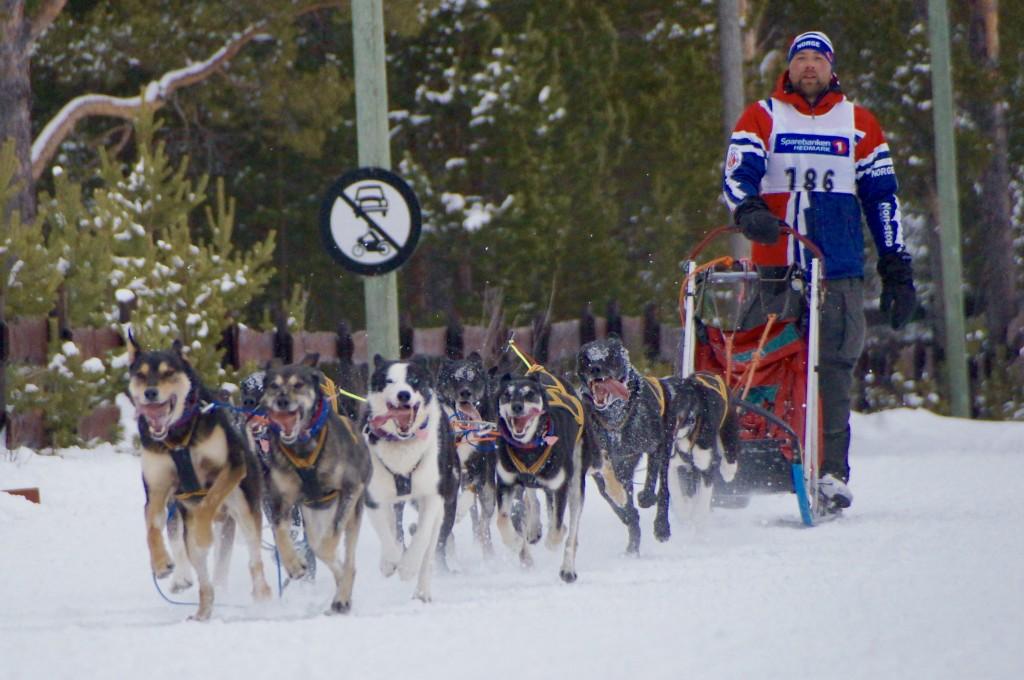 Einar Sand Semmingsen inn til en 4. plass totalt i MD12 med sitt vakre hundespann